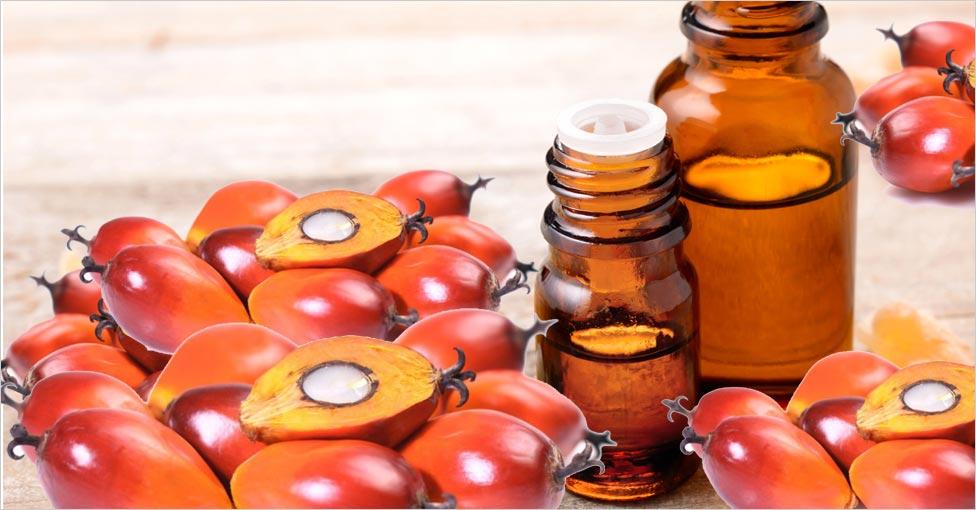 palm kernel oil for skin