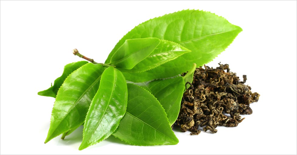 Catechins Found In Green Tea Are Shown To Reduce The Properties Of The Enzyme 5 Alpha Reductase Which Is Often Thought Of Being The Root Cause Of Hair Loss